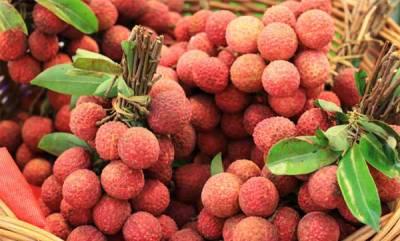 latest-news-litchi-fruit-in-bihar