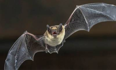 latest-news-bats-and-electricity-shortage