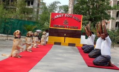 latest-news-army-dog-unit-practiced-yoga-on-yogaday2019