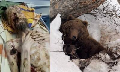mangalam-special-bear-ly-alive-man-dragged-away-by-a-bear-is-found-alive-one-month-later-looking-like-a-mummy-after-being-stored-inside-its-den-as-food