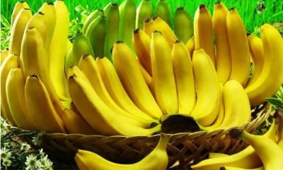 agriculture-banana-plantation-in-kerala