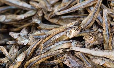 latest-news-rotten-fish-found-from-karunagappali-fish-market
