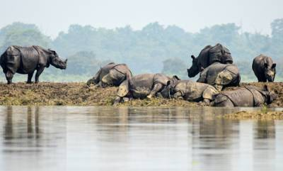 latest-news-death-toll-in-assam-flood-rises-to-37-80-of-kasiranga-national-park-is-submerged
