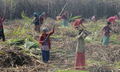 latest-news-in-beed-district-where-the-daily-wage-for-female-farmers-is-3-women-are-having-hysterectomies