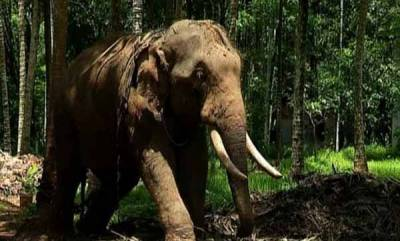 latest-news-land-owner-gives-space-for-elephant-now-he-is-in-crisis