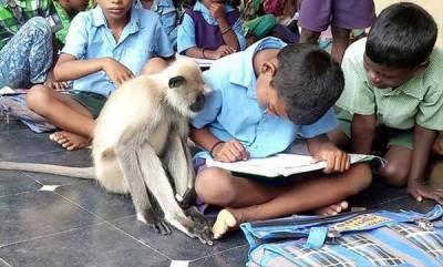 latest-news-monkey-study-maths
