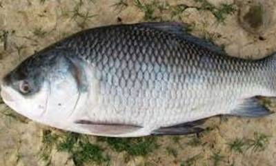 health-news-advantages-of-river-fish