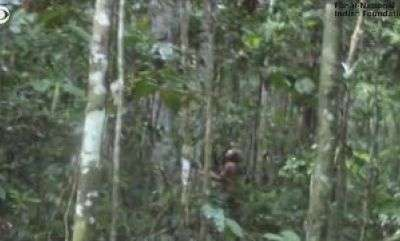 latest-news-amazone-forest-video