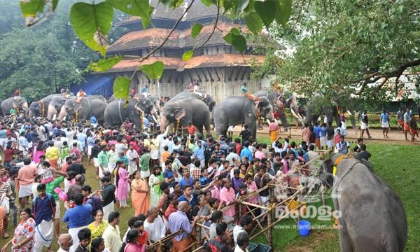Aanayoottu at Thrissur Vadakkumnathan Temple,  Click :- Ranjith Balan
