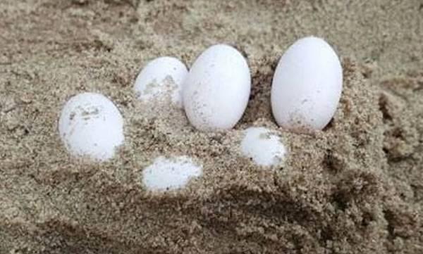 Dozens Eggs,  Sandpit