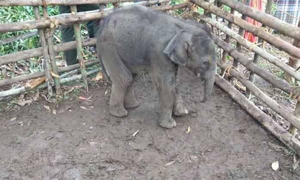 Elephant, Chinnakanal