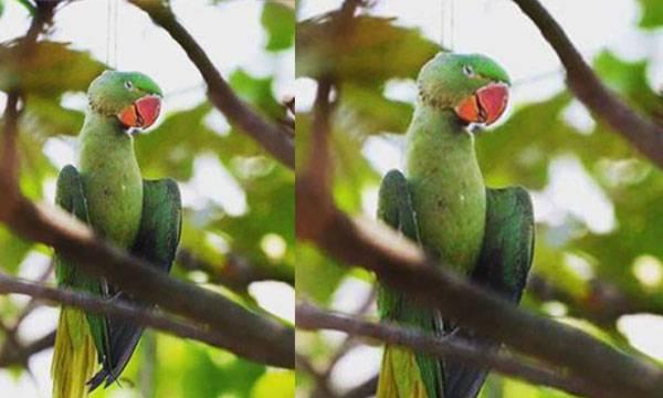 Tragic photo,  Dead parrot, Kite Festival