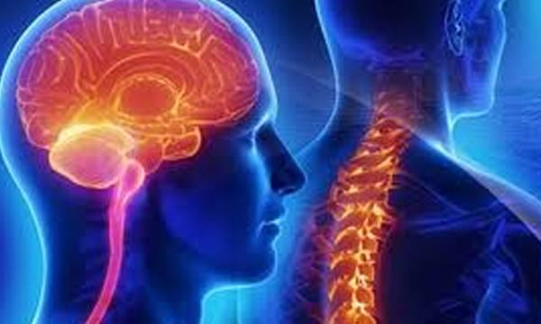 uploads/news/2019/04/299086/Neurology030419c.jpg
