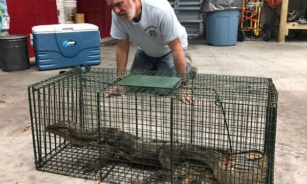 Florida,  Giant Lizard