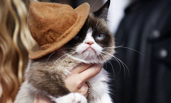 Internet Star, Grumpy Cat