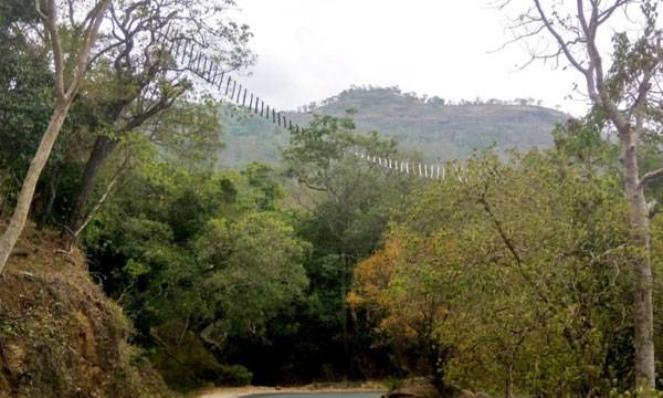 Chinnar Sanctuary, Canopy Bridges