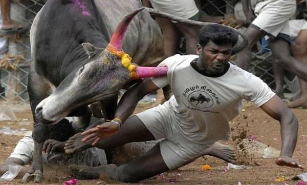 india-sc-not-to-pass-jallikattu-verdict-for-a-week