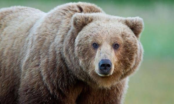 uploads/news/2017/03/88351/bear.jpg