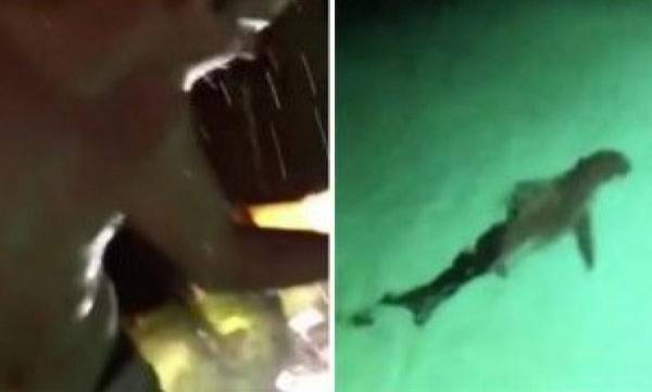 environment-video-drunken-man-jumping-into-pool-full-of-sharks-will-freak-you-out