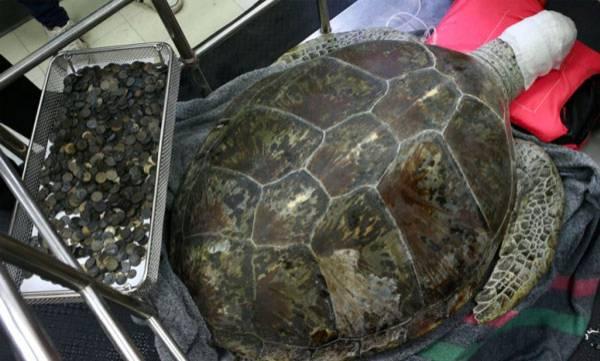 environment-coin-eaten-tortoise-died