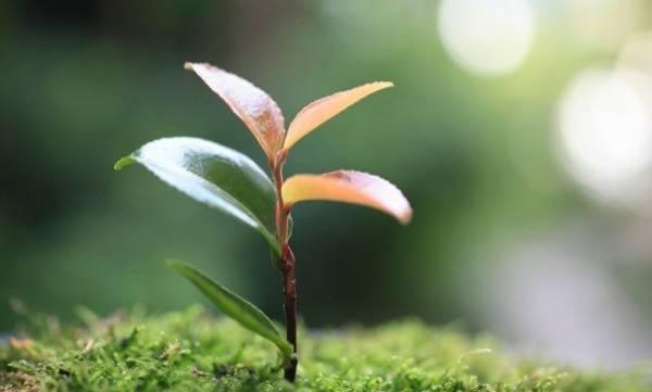uploads/news/2017/05/108413/tree-sapling.jpg