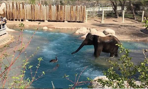 uploads/news/2017/08/134729/elefant.jpg