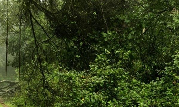 uploads/news/2017/08/136242/forest.jpg