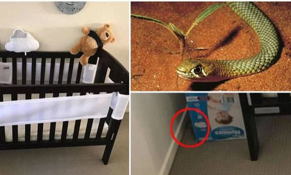Snake found, Yellow snake babies cot