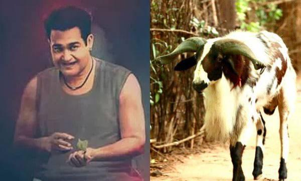 chit-chat-odiyan-can-shape-shifting-as-a-goat-