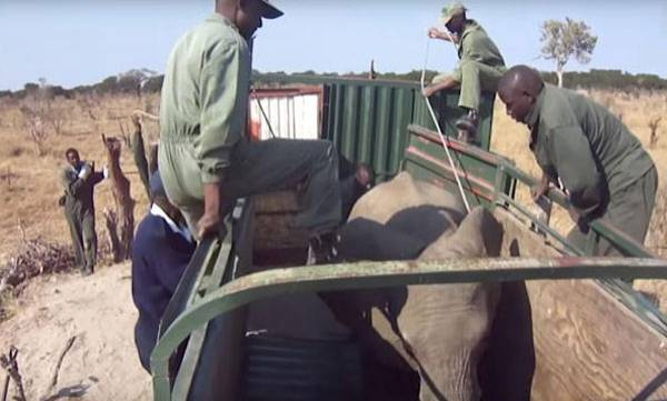 Elephants,  Chinese zoos,  Shocking footage