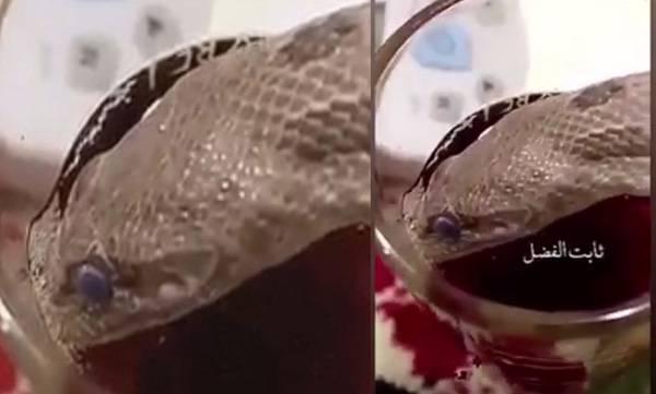 snake drink tea