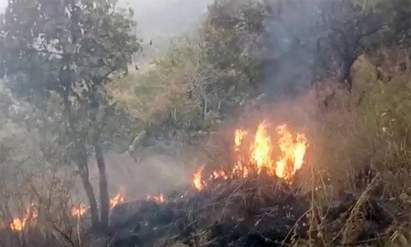 Theni forest fire