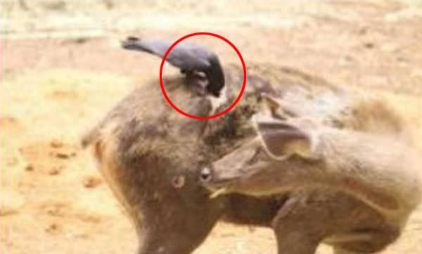 environment-deers-pathetic-pic-goes-viral