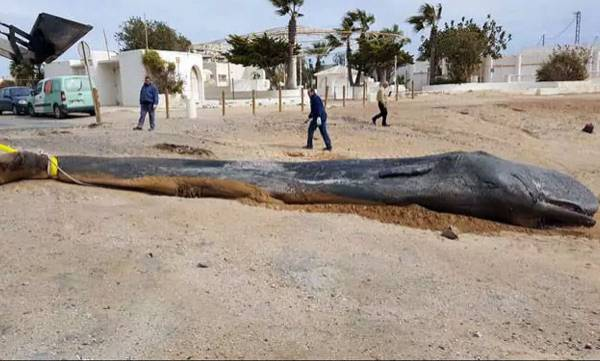 environment-dead-whale-was-found-with-64-pounds-of-trash-in-its-digestive-system