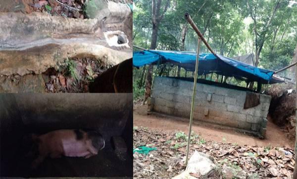 Unauthorized swine farm,  Koruthodu