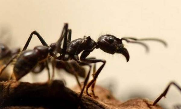 surprise-facts-about-ants