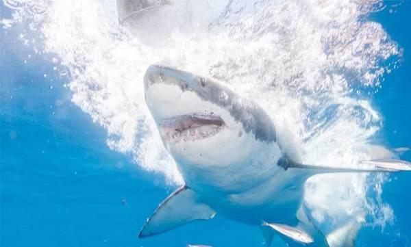 uploads/news/2018/09/250227/shark.jpg
