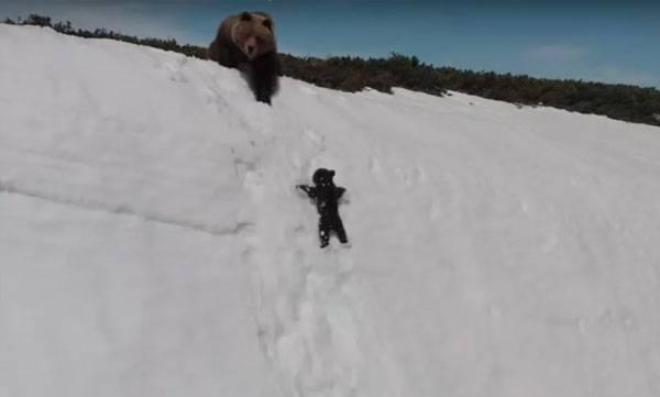 adorable baby bear clip