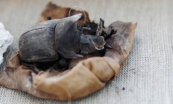 Scarab beetles,  Egyptian tombs