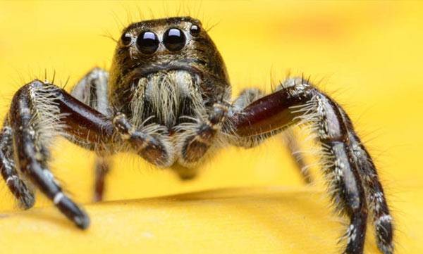 environment-jumping-spider-feeds-babys-with-milk