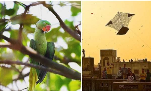 environment-tragic-photo-of-dead-parrot-at-kite-festival-leaves-internet-heartbroken