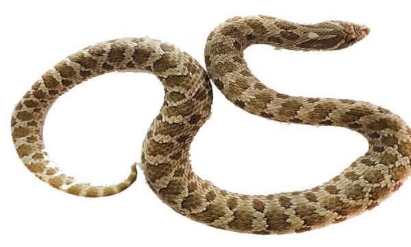 snakes stomach