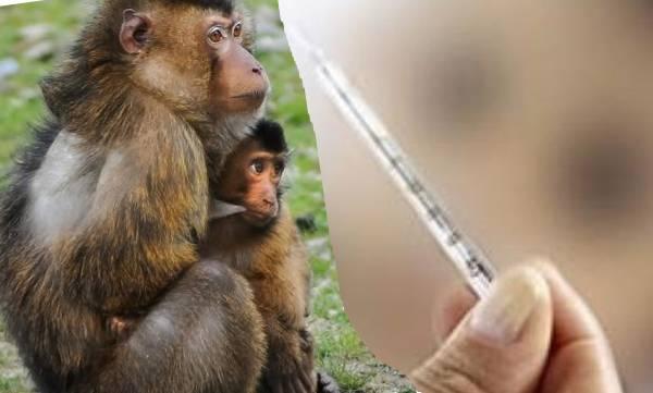 uploads/news/2019/01/282675/monkey-fever.jpg