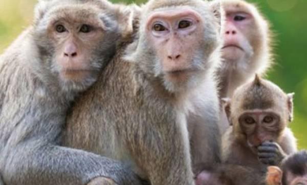 uploads/news/2019/04/304767/monkey-fever.jpg