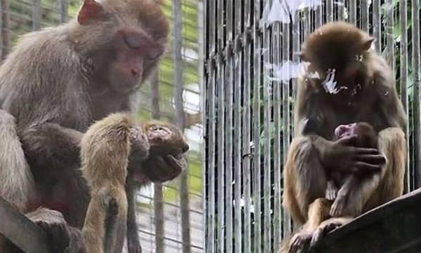 Monkey,