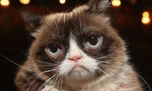 environment-internet-star-grumpy-cat-dies