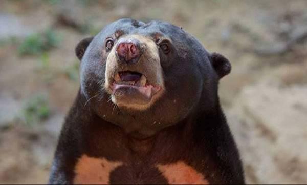 Singer, Arrested,  Keeping Bear