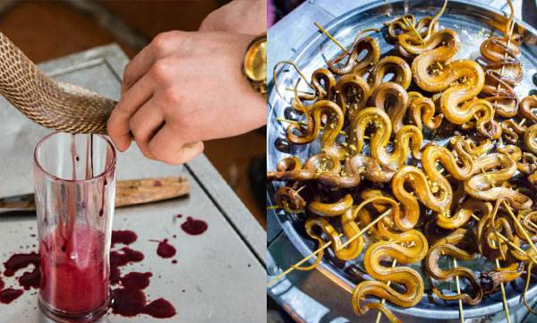 snake restaurants