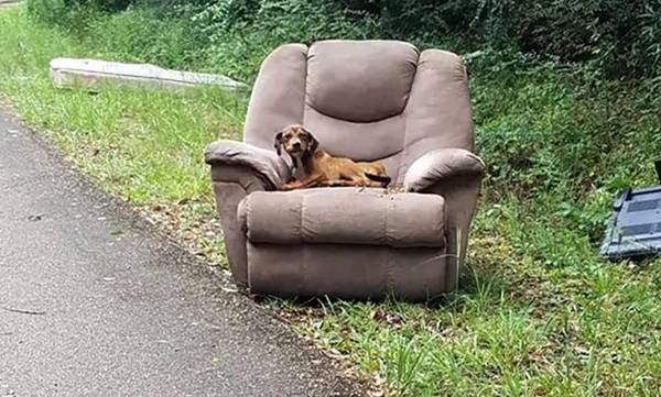Dog, Dumped, Chair