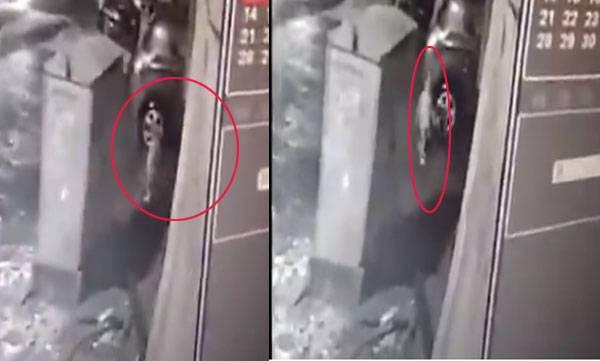 CCTV, Video, Three year old